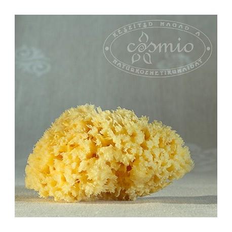 Honeycomb tengeri szivacs